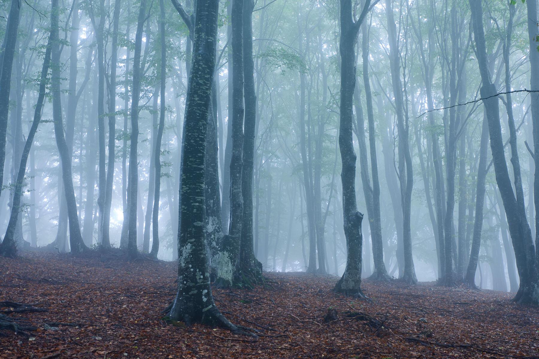 Alberi e boschi