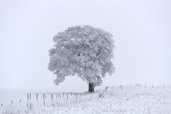 Il gigante bianco