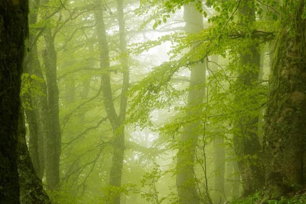 Magie del bosco