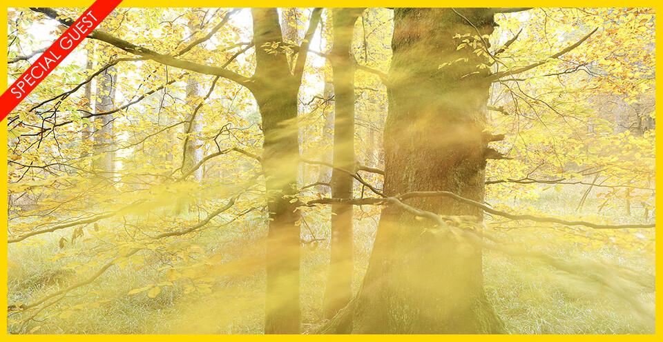 Lucio Tolar – Le Foreste