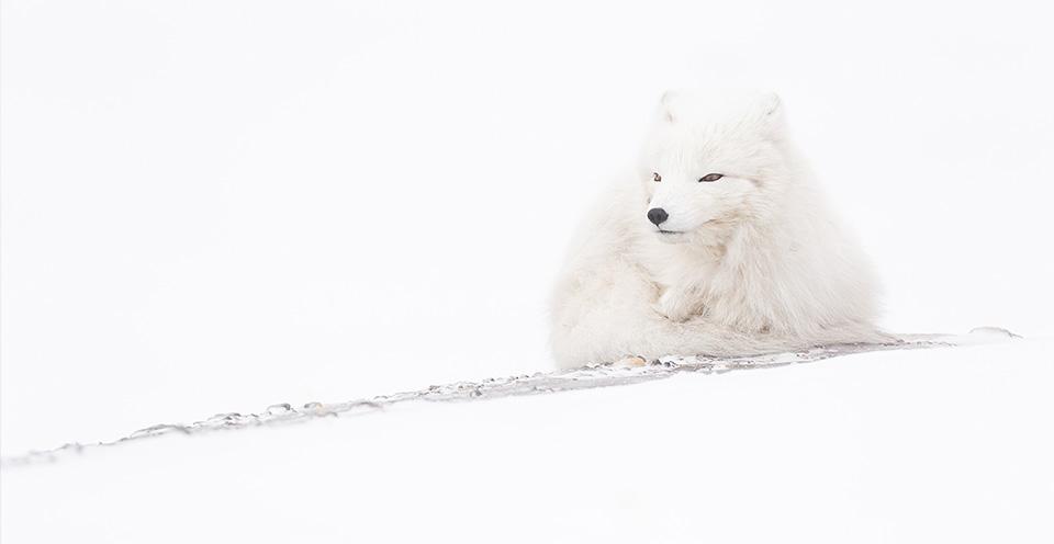 Davide Biagi – The Magic of Svalbard Islands